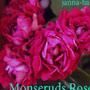 Monseruds Rosen