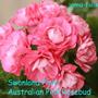 Swanland Pink/Australian Pink